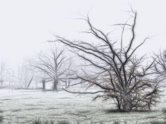 Ein Nebelbild...