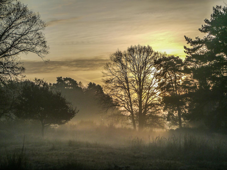 Ein Nebelmorgen