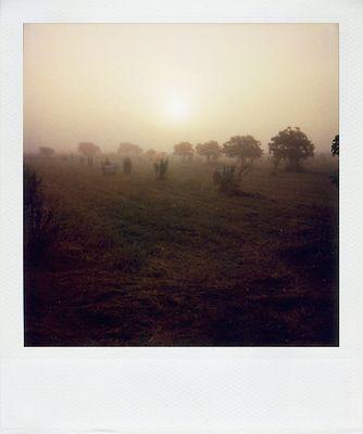 Ein nebliger Morgen II