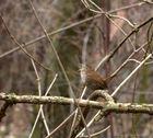 Ein Nest im Baumstamm.....