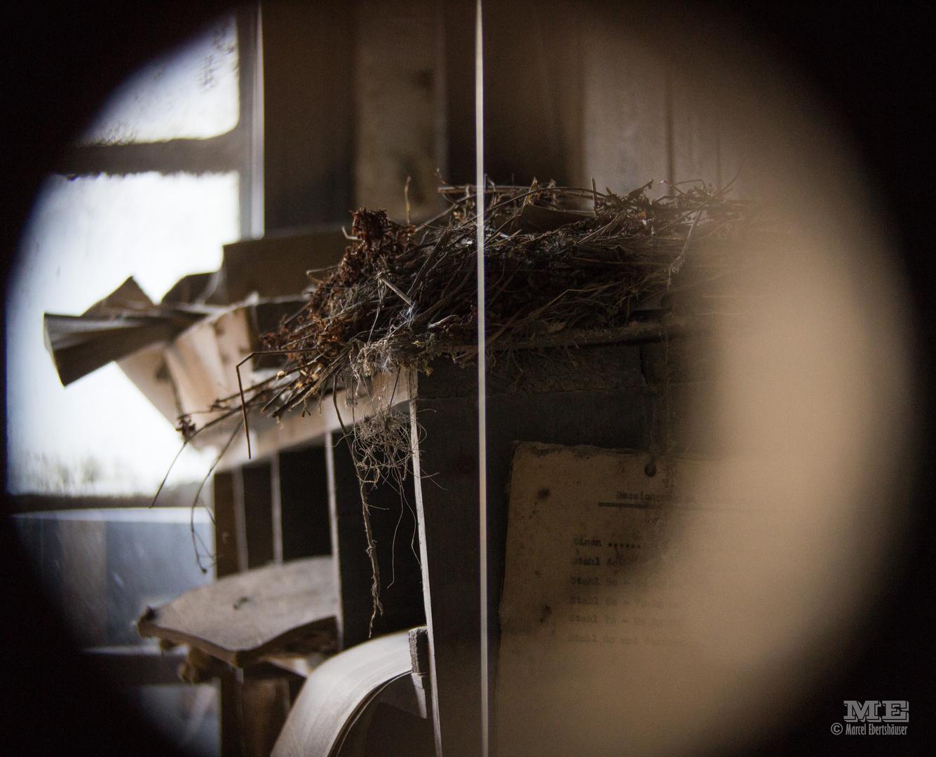 Ein Nest im Verborgenen