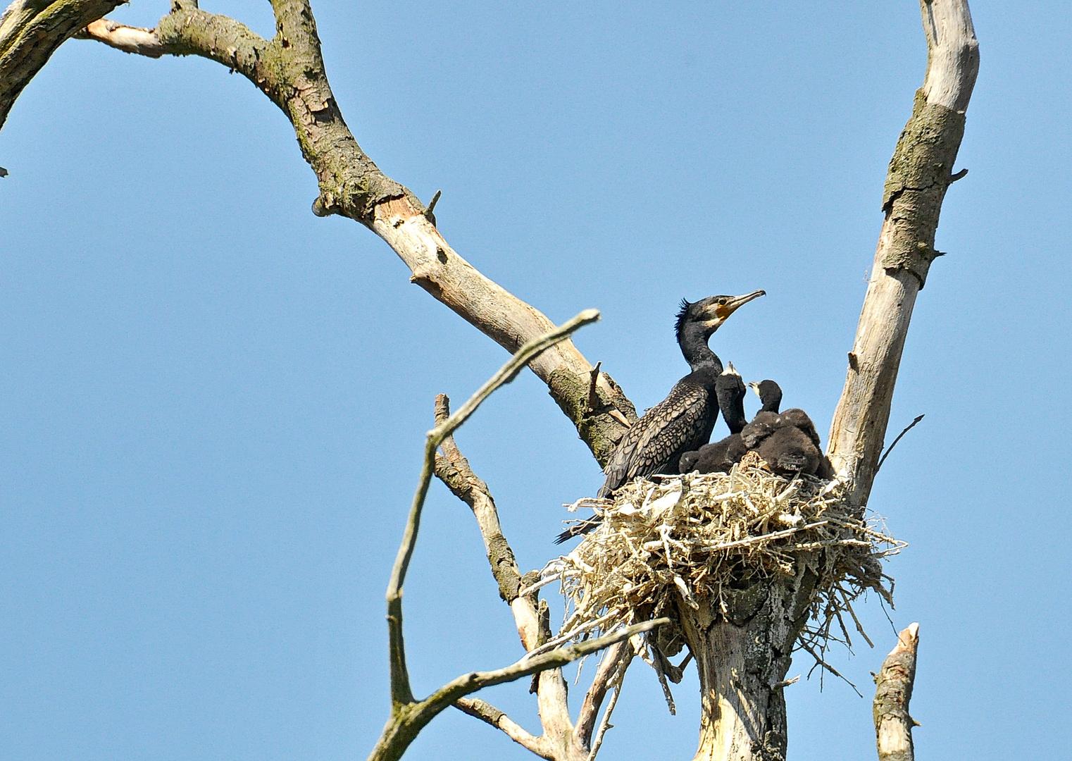 Ein Nest in der Kolonie