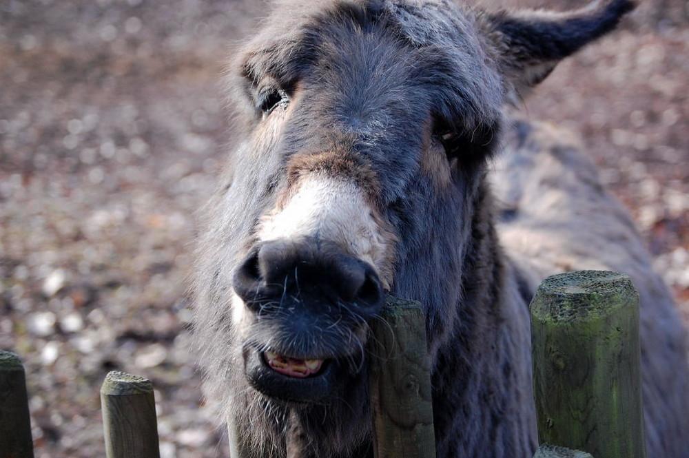 Ein netter Esel