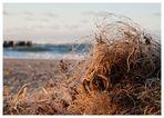ein Netz am Strand