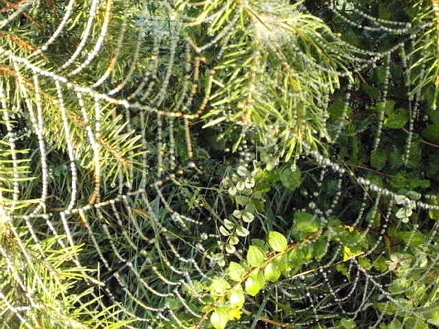 Ein Netz aus winzigen Perlen