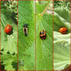 ein neuer Käfer