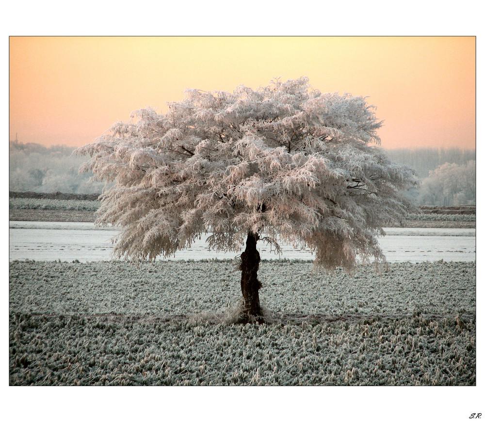 ein neues Kleid für den Baum