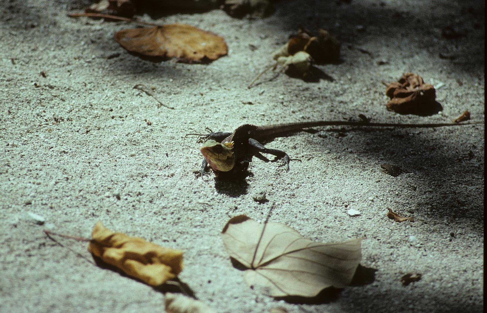 ein neugieriger Gecko