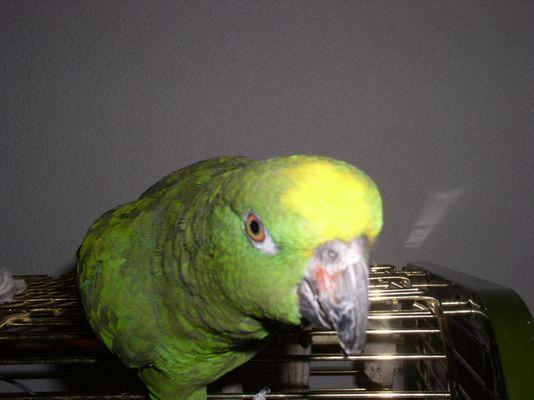 Ein neugieriger Vogel ;-)