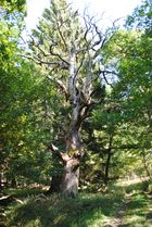 Ein nicht mehr schöner Baum