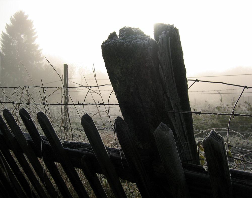 Ein November-Morgen an der NebelWeide...