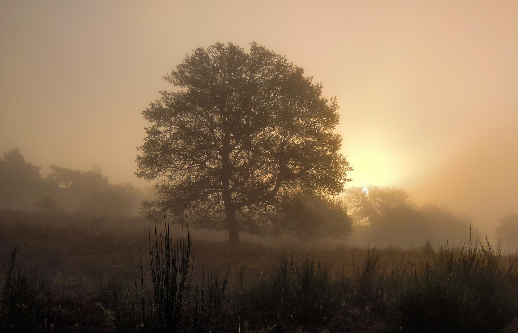 Ein Oktobermorgen 2