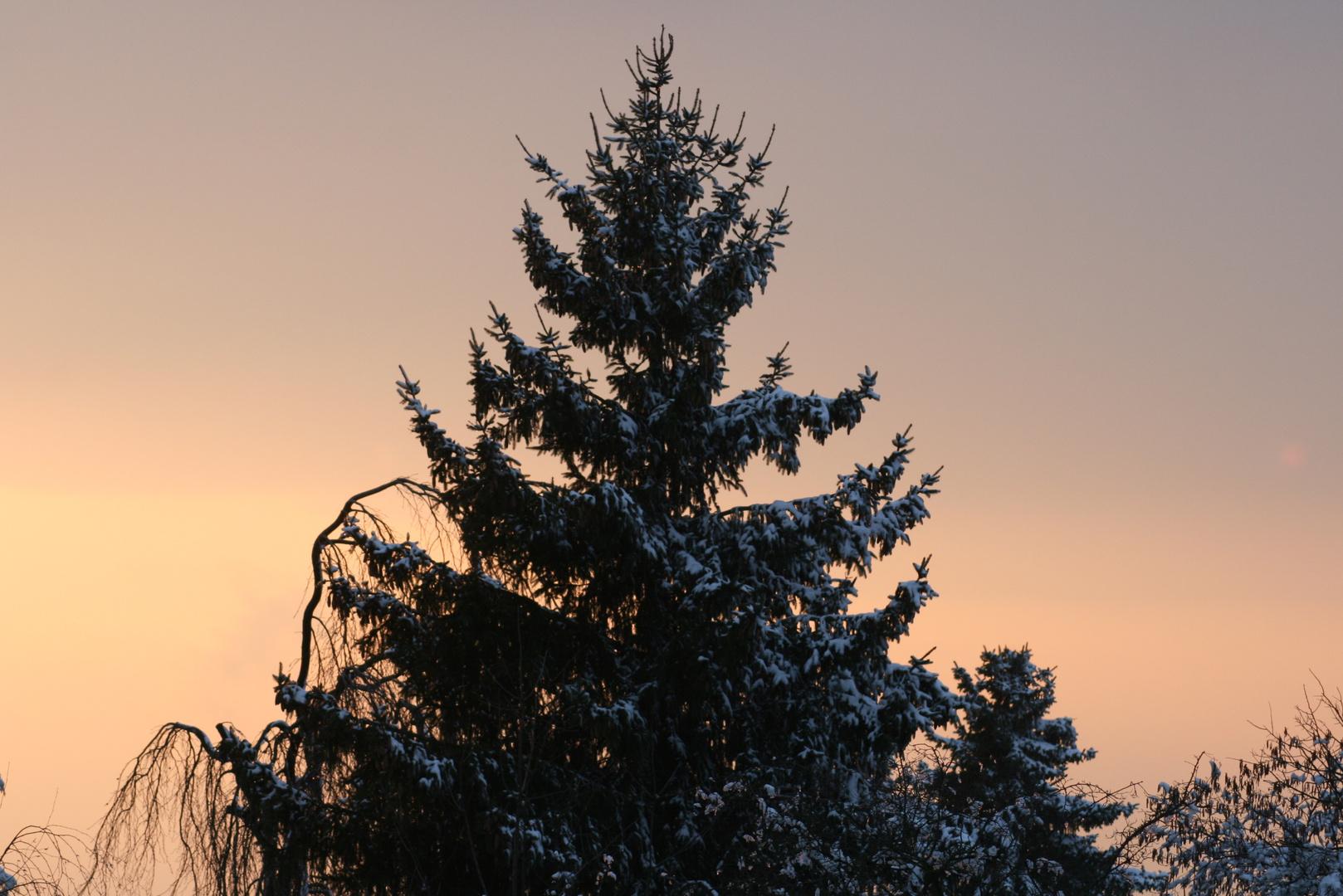 ein osterbaum..