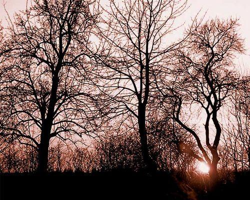 Ein paar Bäume