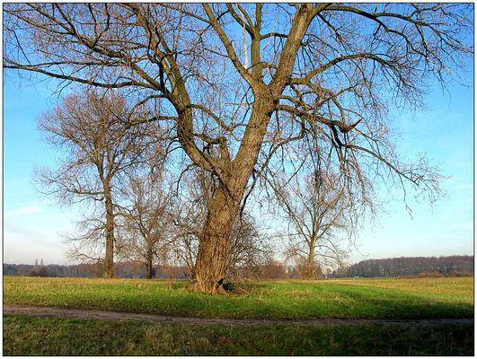 Ein paar Bäume auf der Wiese ...