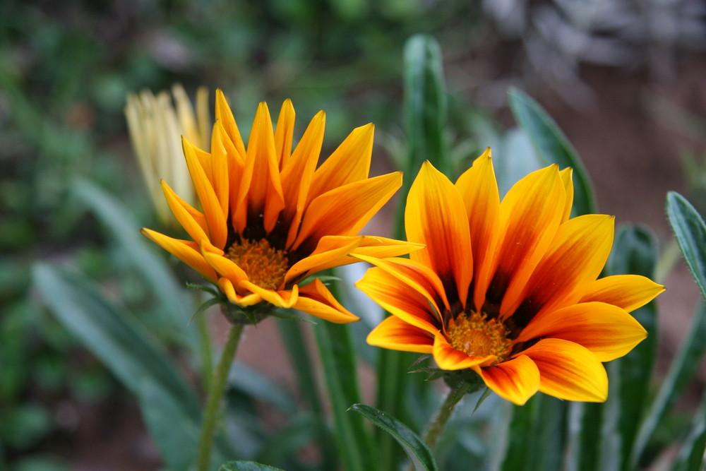 Ein Paar Blüten im Herbst.