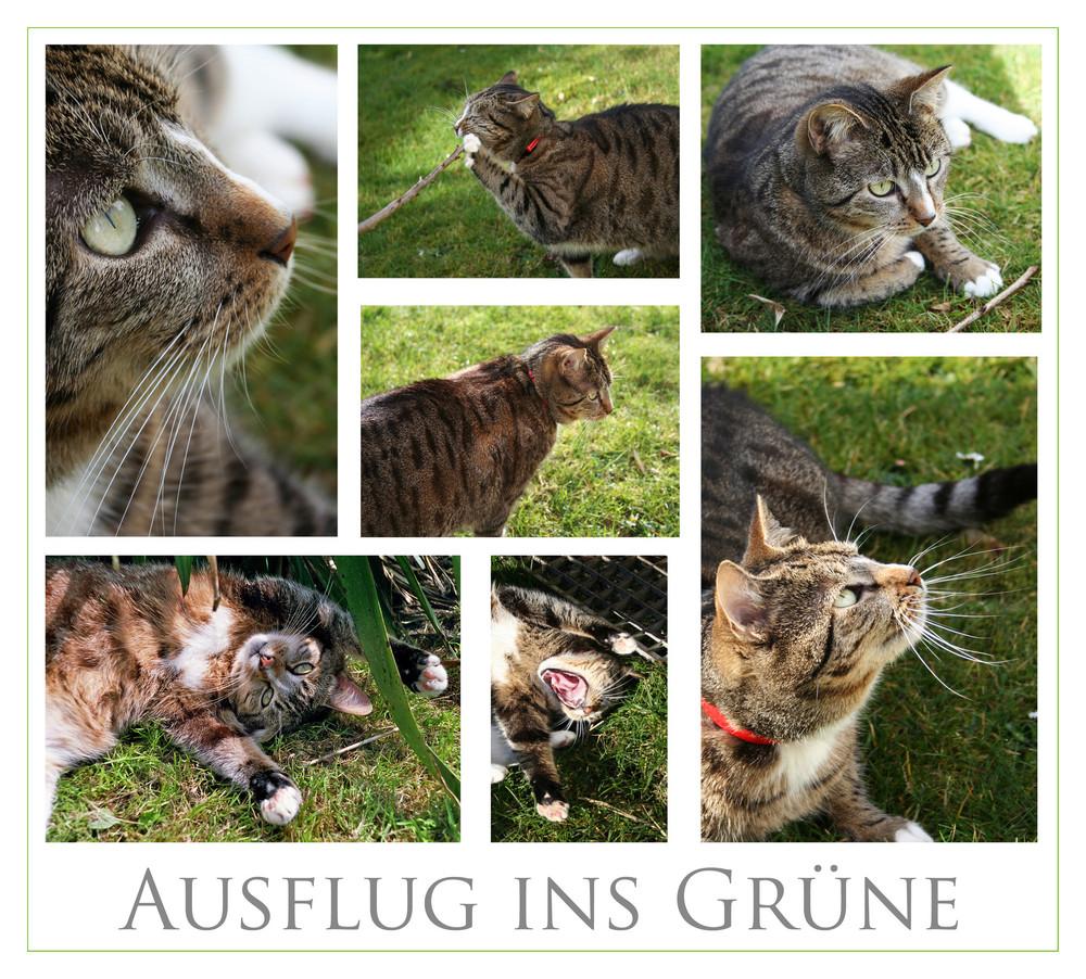 ein paar Einblicke in die Welt einer Katze