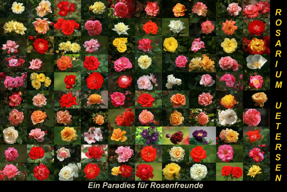 Ein Paradies für Rosenfreunde...