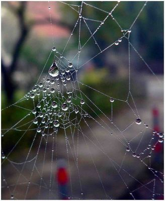 Ein Perlencollier - gewebt von Frau Spinne