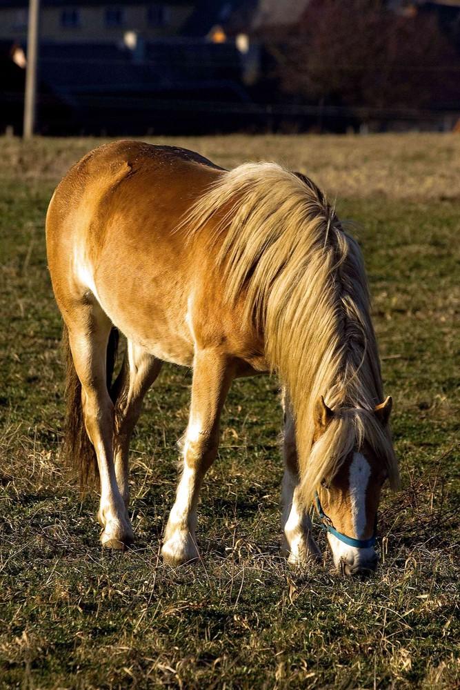 Ein Pferd...