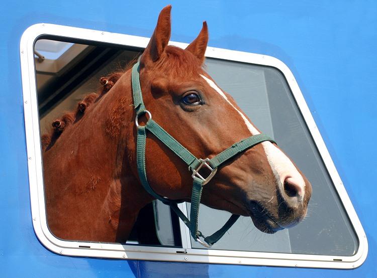 Ein Pferd mit Durchblick
