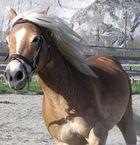 Ein Pferd namens Wanda