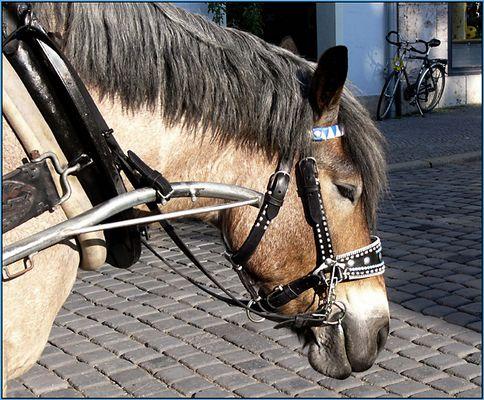 Ein Pferdekopf, ein Fahrrad