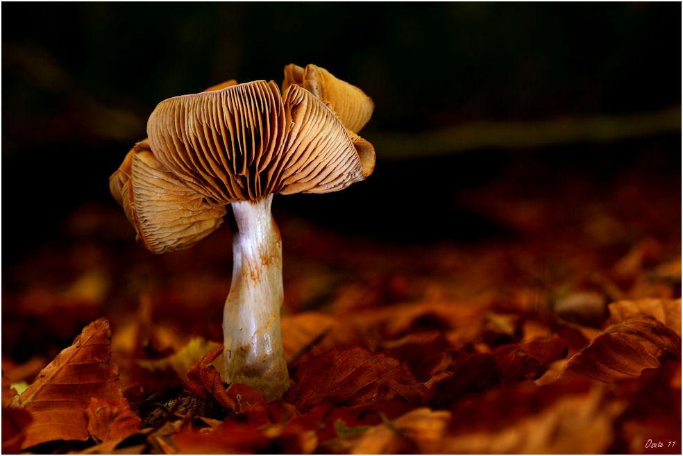Ein Pilz…