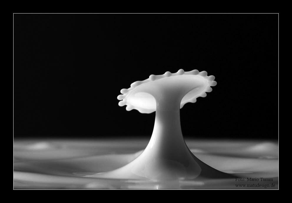 Ein Pilz aus Milchtropfen