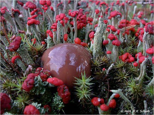 Ein Pilz hat sich verirrt...