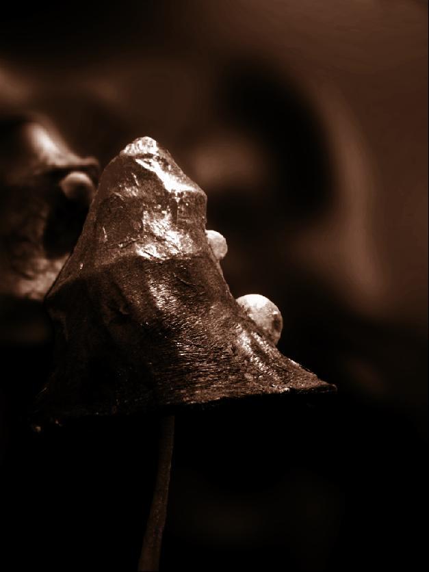 Ein Pilz im Mittelalter