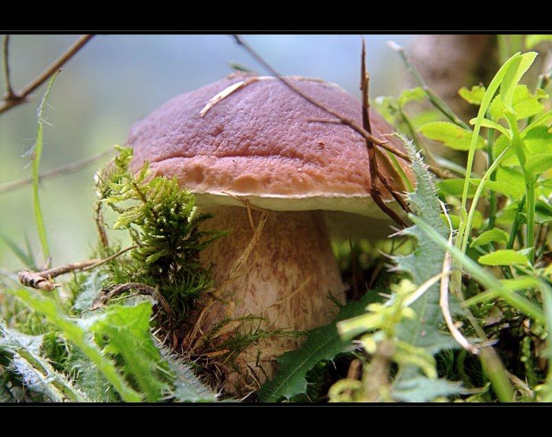 Ein Pilz in Hinterglemm