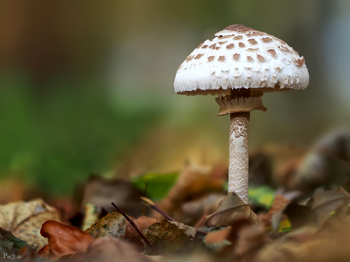 Ein Pilzlein.........