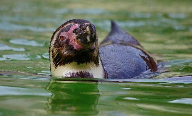 Ein Pinguin grüßt...
