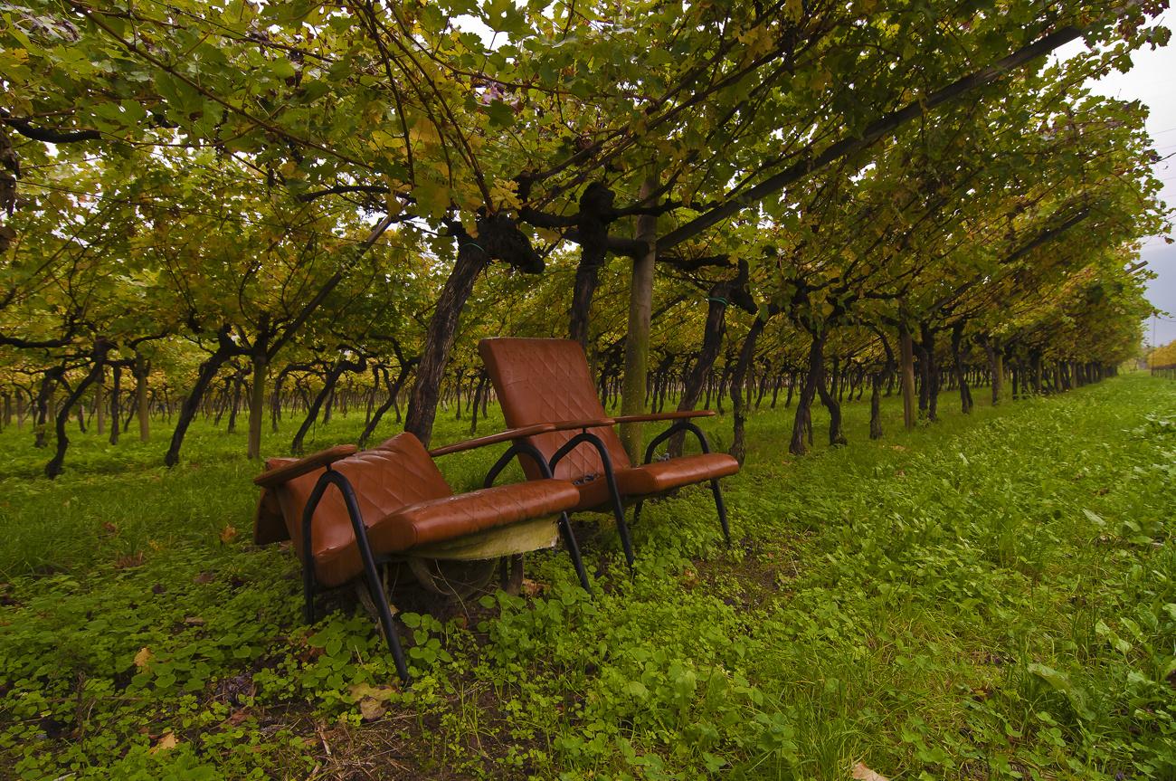 *** ein Platz unter den Wein ***