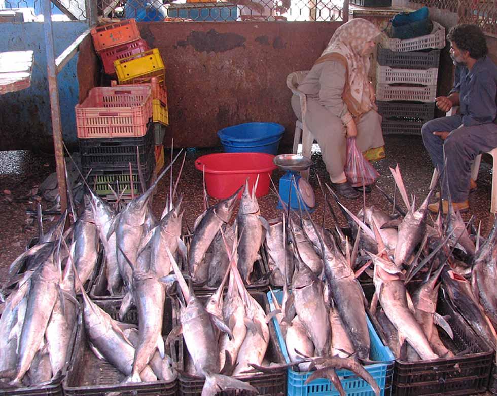 EIn Plausch hinter Schwertfischen