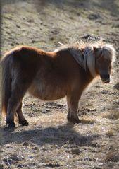 ...ein Pony