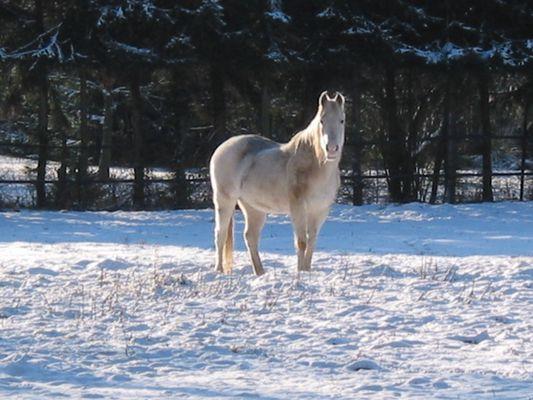 Ein Pony im Schnee
