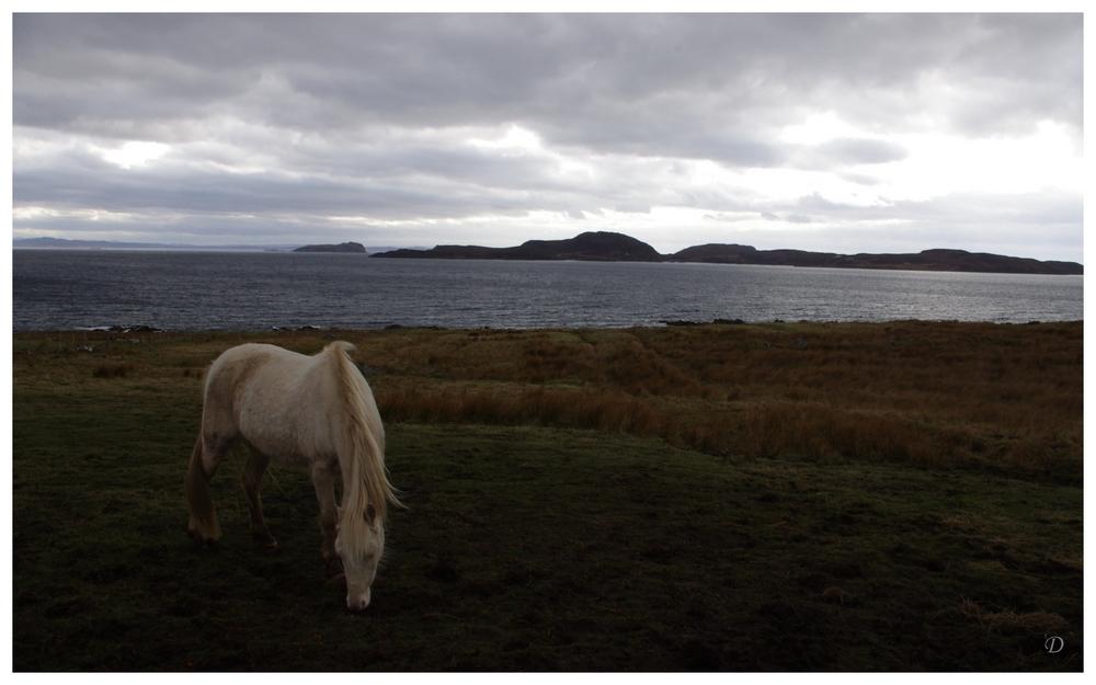 Ein Pony, Lochs und weites Land