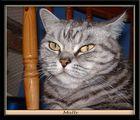 Ein Portrait meiner Gastkatze Mally