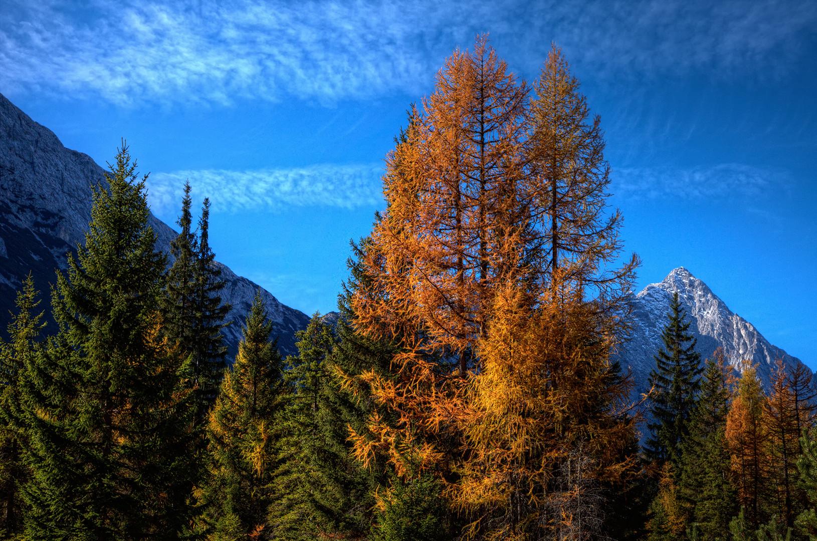 ein Quantum Herbst