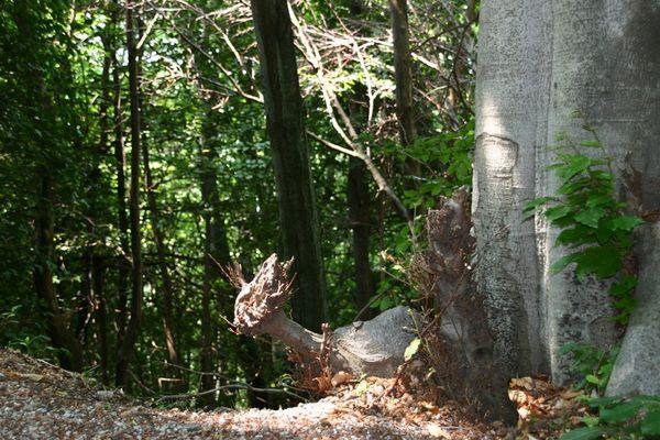 Ein Rehkitz im Walde