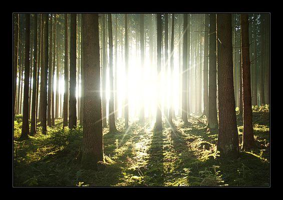 Ein reiner Fichtenwald ist auch im Herbst......
