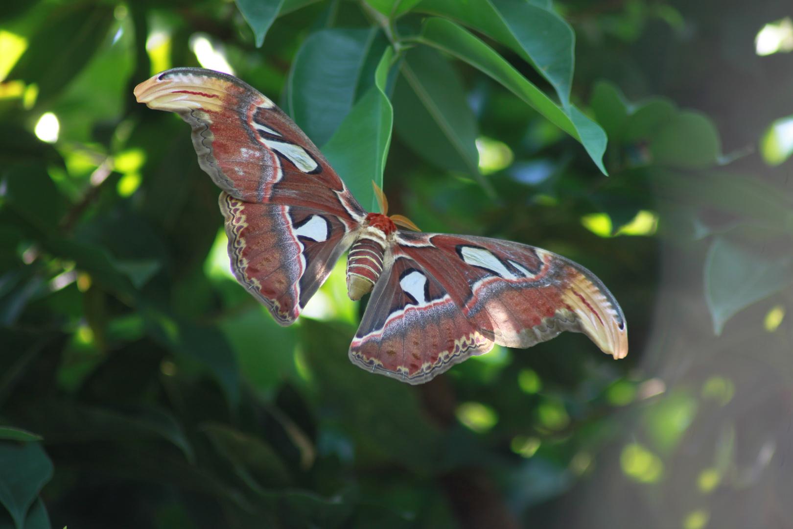 ein riesen Schmetterling