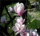 Ein rosa Frühlingstraum !