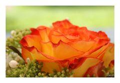 Ein Rosengruß von mir für euch.....