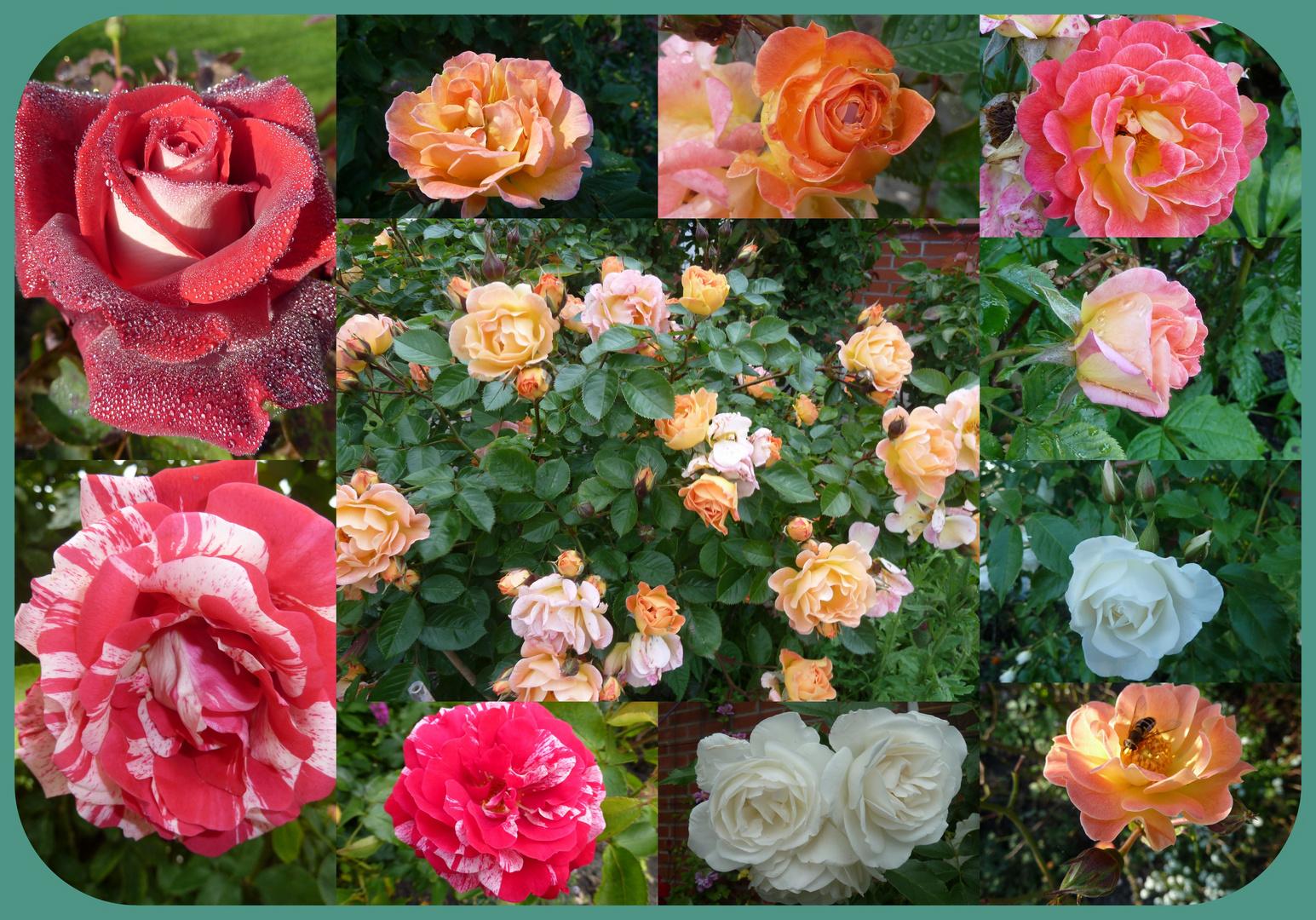 Ein Rosenstrauß aus meinem Garten......