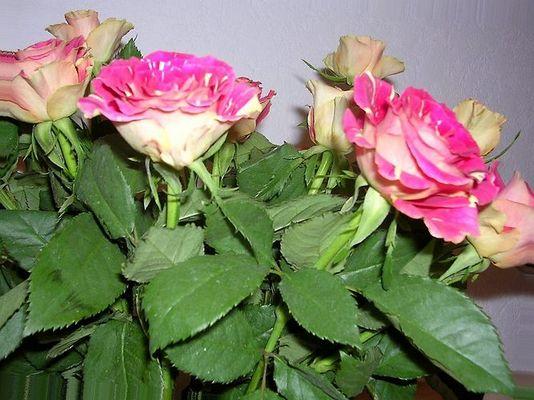 ein Rosenstrauß verschönt das Haus