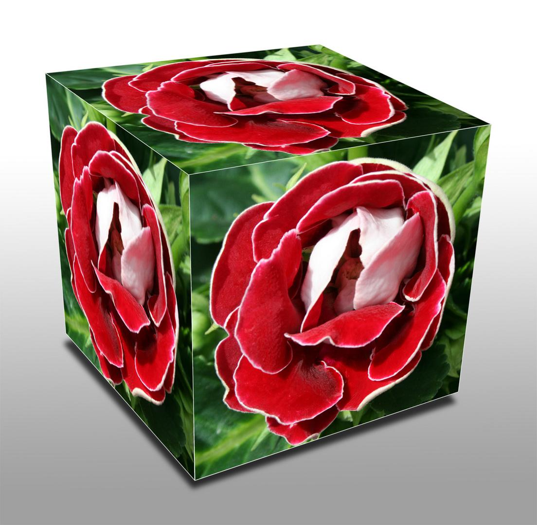 Ein Rosenwürfel