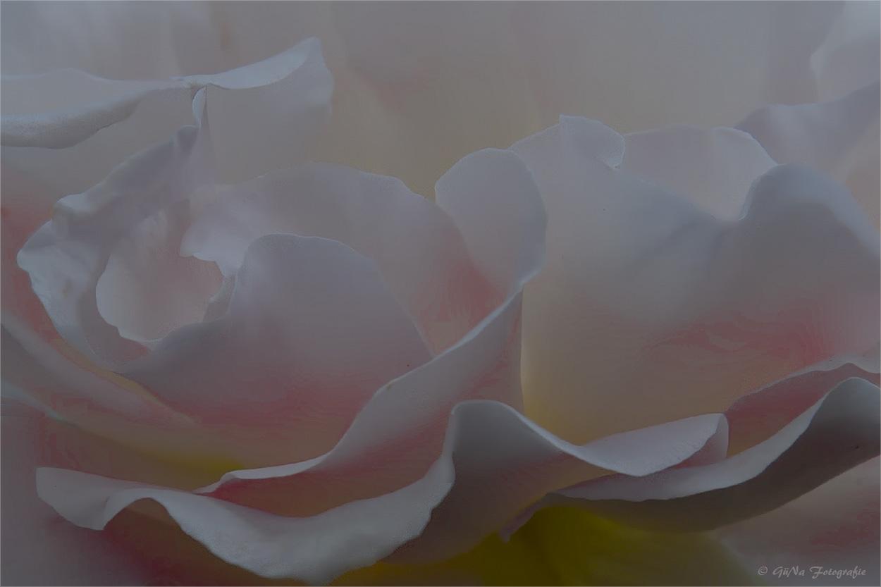 Ein Rückblick auf's Rosenjahr ( 1 )